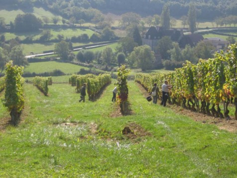 Discover the wineyard in east Sussex